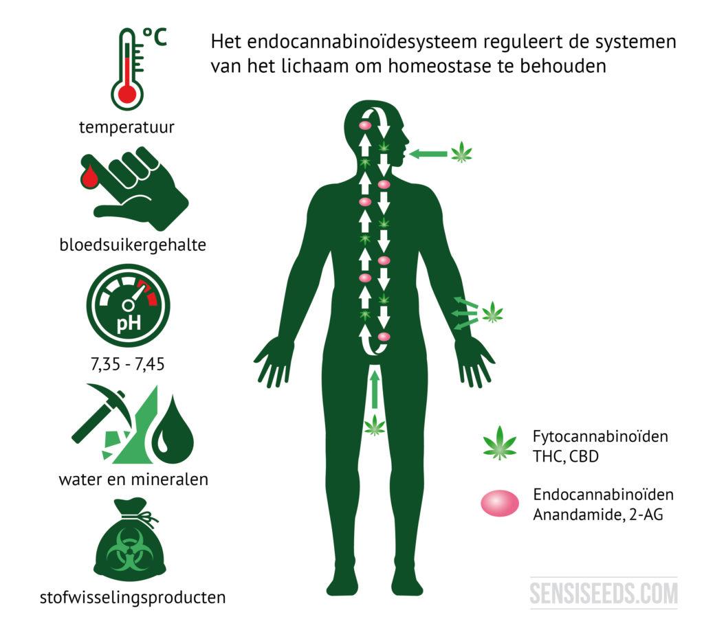 Illustratie ter verduidelijking van het endocannabinoïdesysteem. Links op de illustratie staan afbeeldingen die de lichaamstemperatuur, de bloedsuikerspiegel, de pH-waarde, de water- en minerale huishouding en de stofwisselingseindproducten voorstellen. Rechts daarvan zijn de contouren van een mens afgebeeld. Fytocannabinoïden komen door de mond en de huid in het lichaam terecht, zoals te zien is op de illustratie.