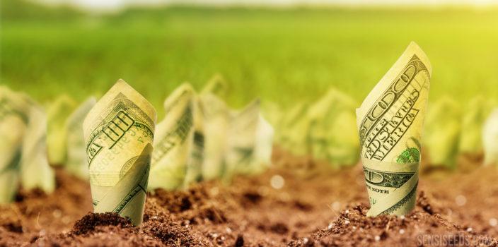 Een foto van opgerolde briefjes van honderd dollar die in de grond zijn gestoken. Op de achtergrond is onscherp een groen veld te zien.