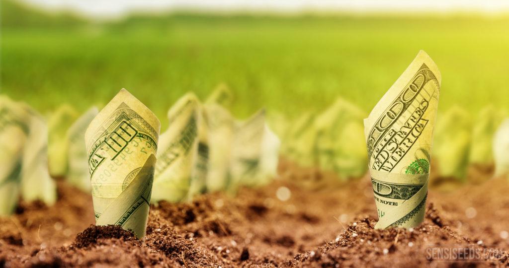 Photo de billets de cent dollars enroulés et plantés dans le sol. À l'arrière-plan, on voit un champ vert en flou.
