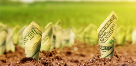 Photo of hundred-dollar bills rolled up and planted in the ground. In the background, out of focus, there is a green field.