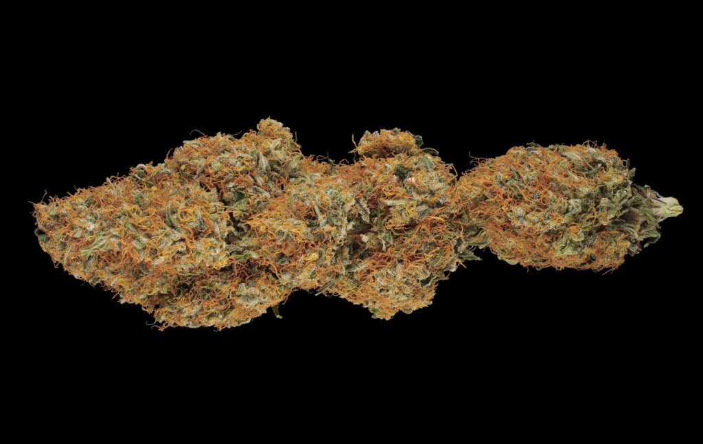 """Close-up of a dried bud of the """"Shiva Skunk"""" cannabis variety against a black background."""