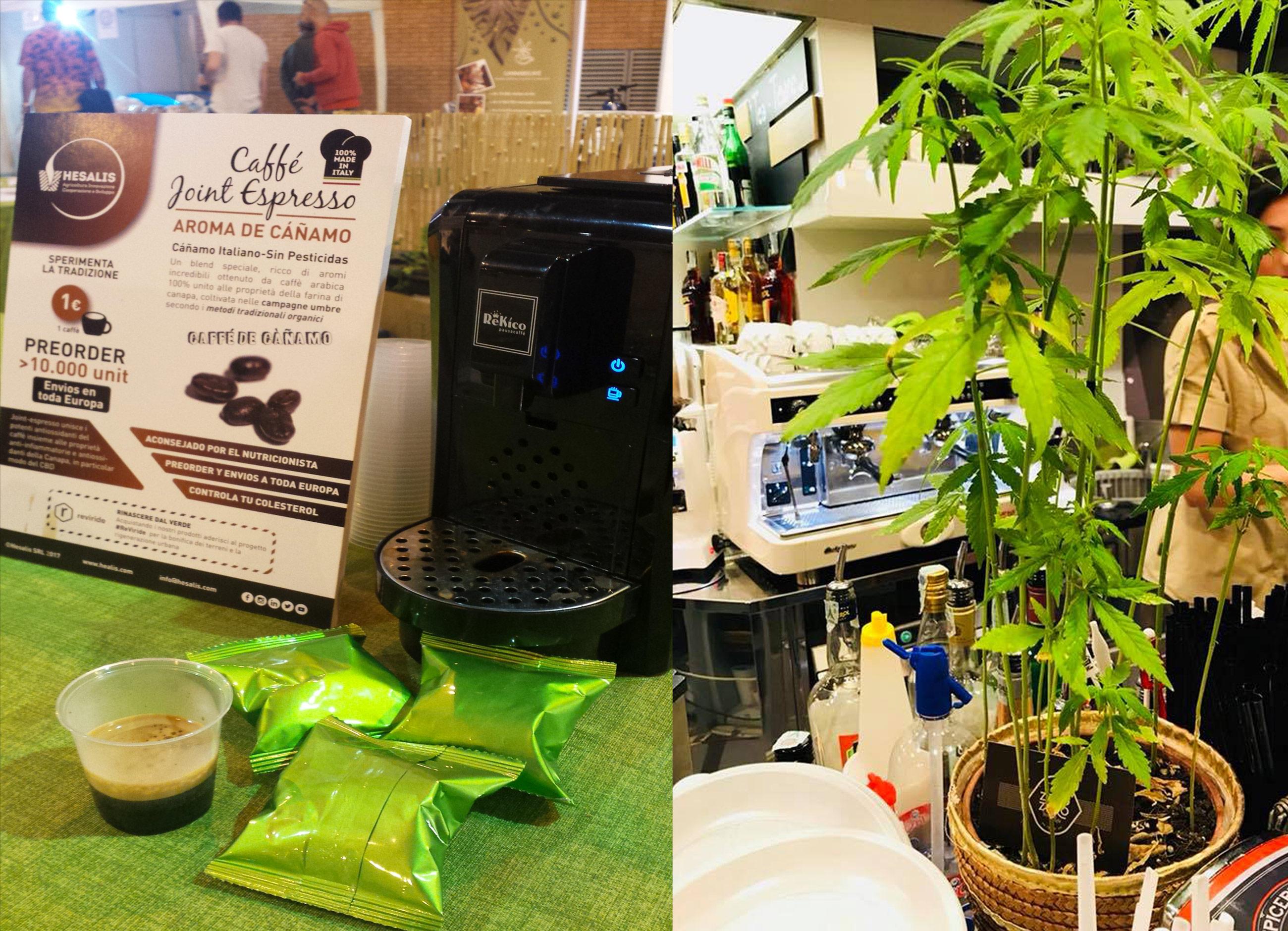 Kann Kaffee Kolumbiens Landwirte vor dem Cannabis-Boom retten? - Sensi Seeds Blog