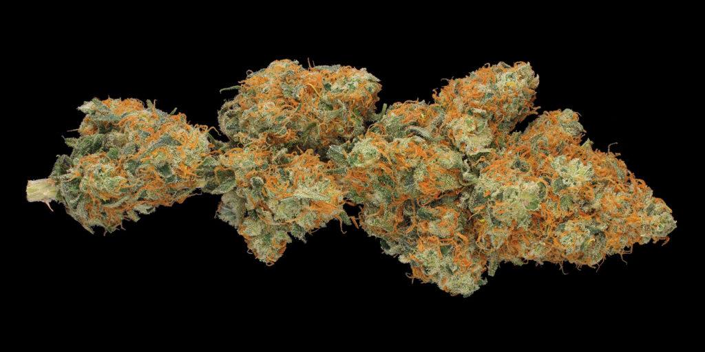 Nahaufnahme einer mit Trichomen bedeckten Blüte der Cannabissorte Hindu Kush vor schwarzem Hintergrund.