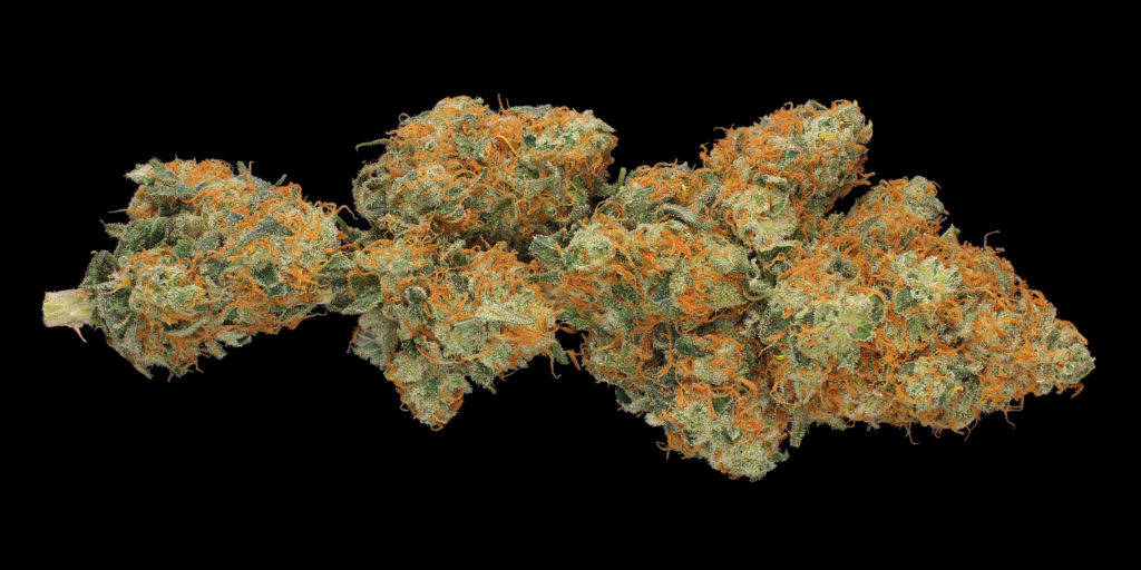 Een close-up van een gedroogde top van de cannabissoort Hindu Kush tegen een zwarte achtergrond.