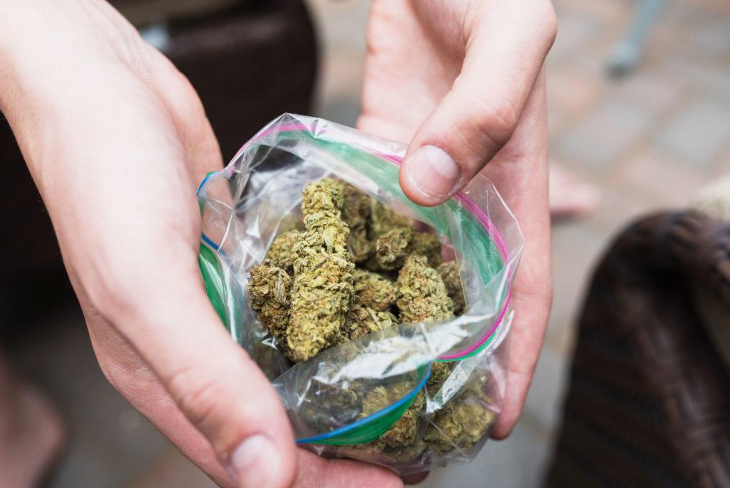 Primer plano de dos manos que sostienen una bolsa de plástico abierta con cogollos de cannabis, mostrándoselos a la cámara.