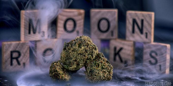 """Close-up van drie moonrocks die in rook gehuld op een tafel liggen. Op de achtergrond zien we Scrabble-letters die de woorden """"MOON ROCKS"""" vormen. Moonrocks zijn een uitzonderlijk sterk cannabisproduct, dat gemaakt wordt van gedroogde toppen die met cannabisolie worden begoten en vervolgens bedekt worden met kief."""