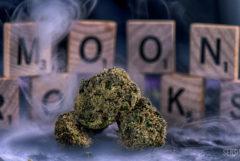 Gros plan sur trois « moonrocks » posées sur une table et entourées de fumée. On voit à l'arrière-plan des lettres de Scrabble épeler les mots « MOON ROCKS ». Les moonrocks sont fabriquées à partir de têtes de cannabis séchées, plongées dans de l'huile de cannabis puis recouvertes de skuff.
