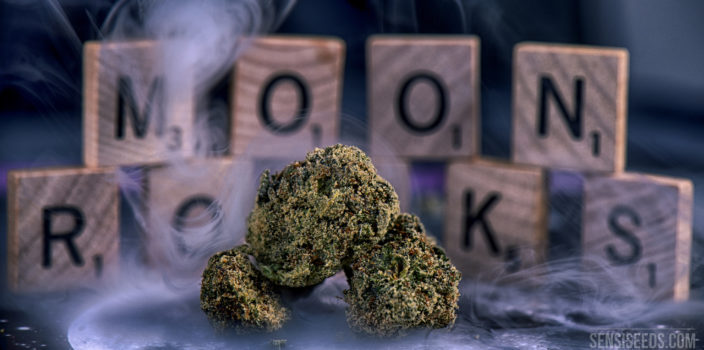Close-up of three moon rocks that are lying on a table surrounded by smoke. In the background are some Scrabble letters spelling the words 'MOON ROCKS'. Moon Rocks are a particularly strong cannabis product made from a dried bud which is soaked in cannabis oil and then coated with kief.