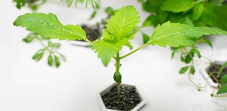 Ist biologische Hydroponik möglich?