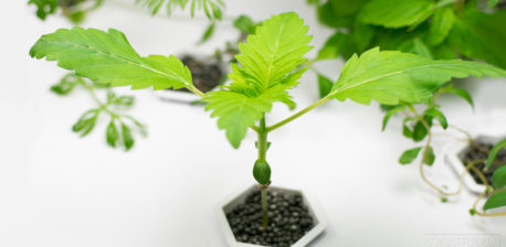 Is Organic Hydroponics Possible