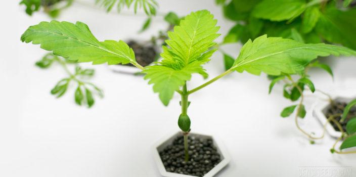 Is Organic Hydroponics Possible