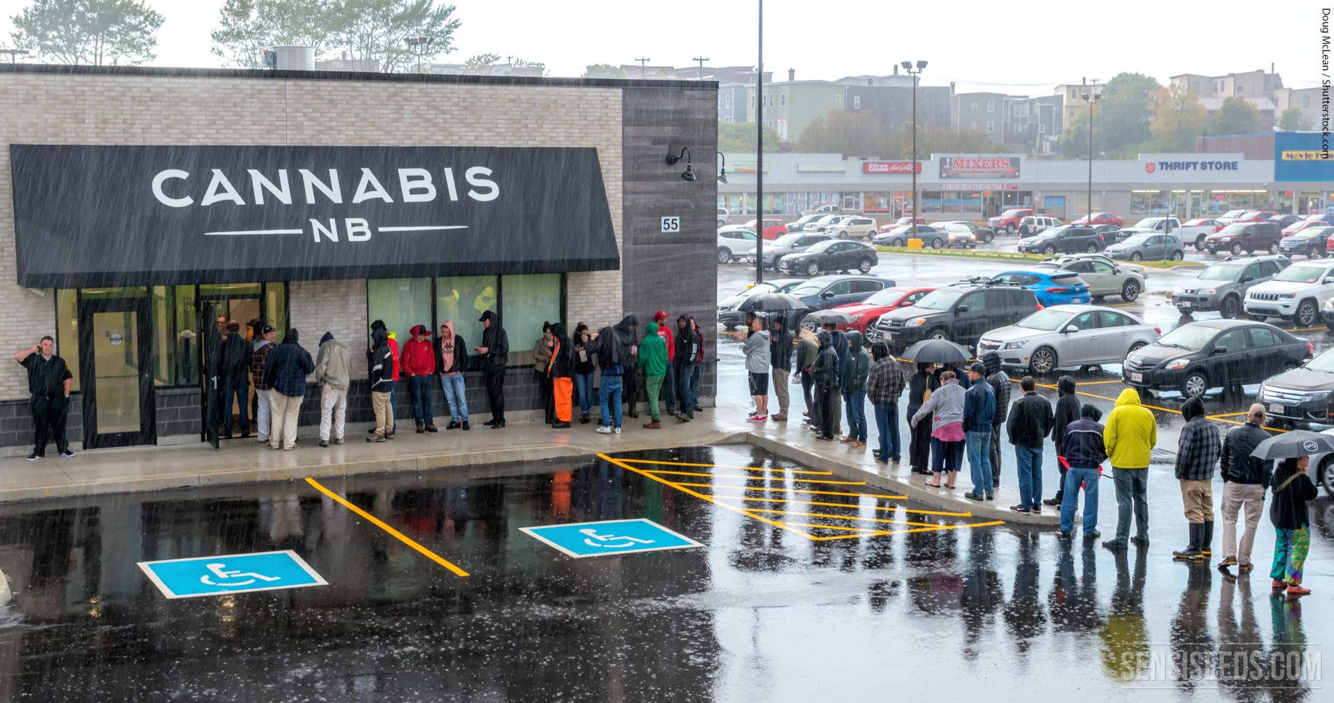 Confronting Canada's Cannabis Shortage
