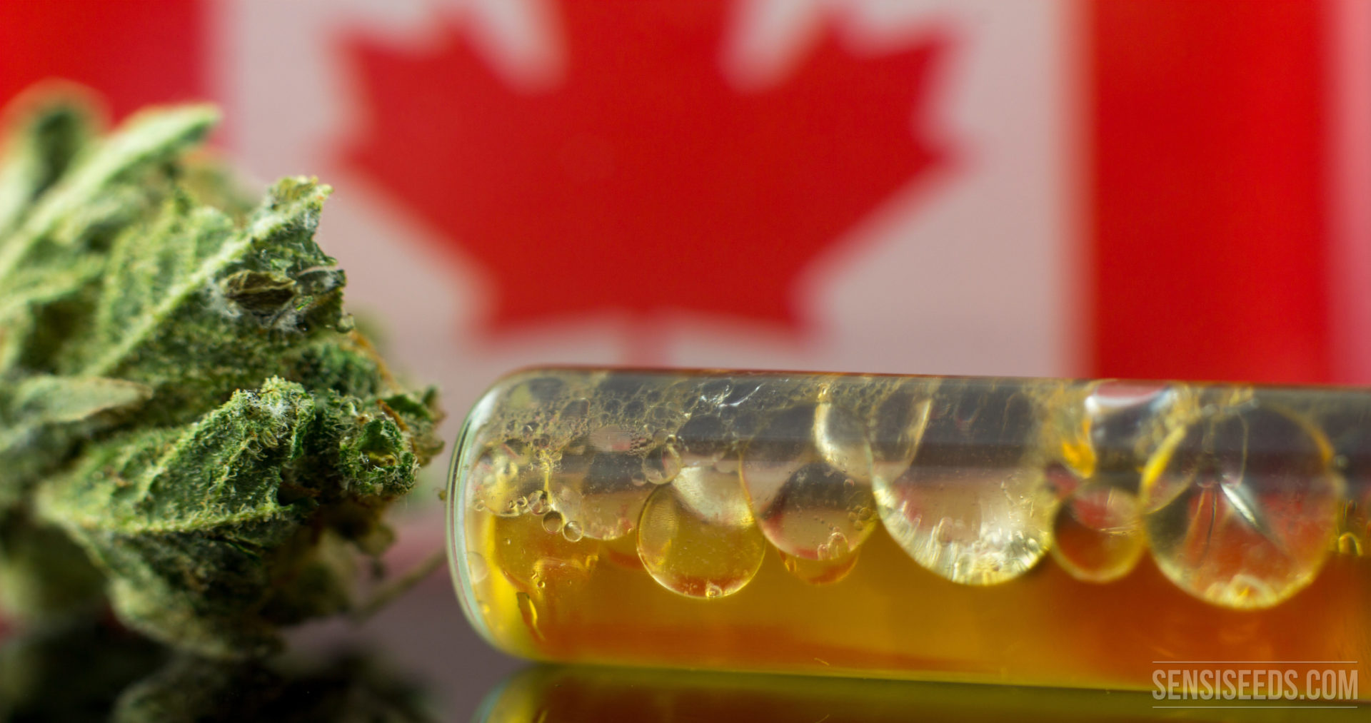 The Future of Medicinal Cannabis in Canada