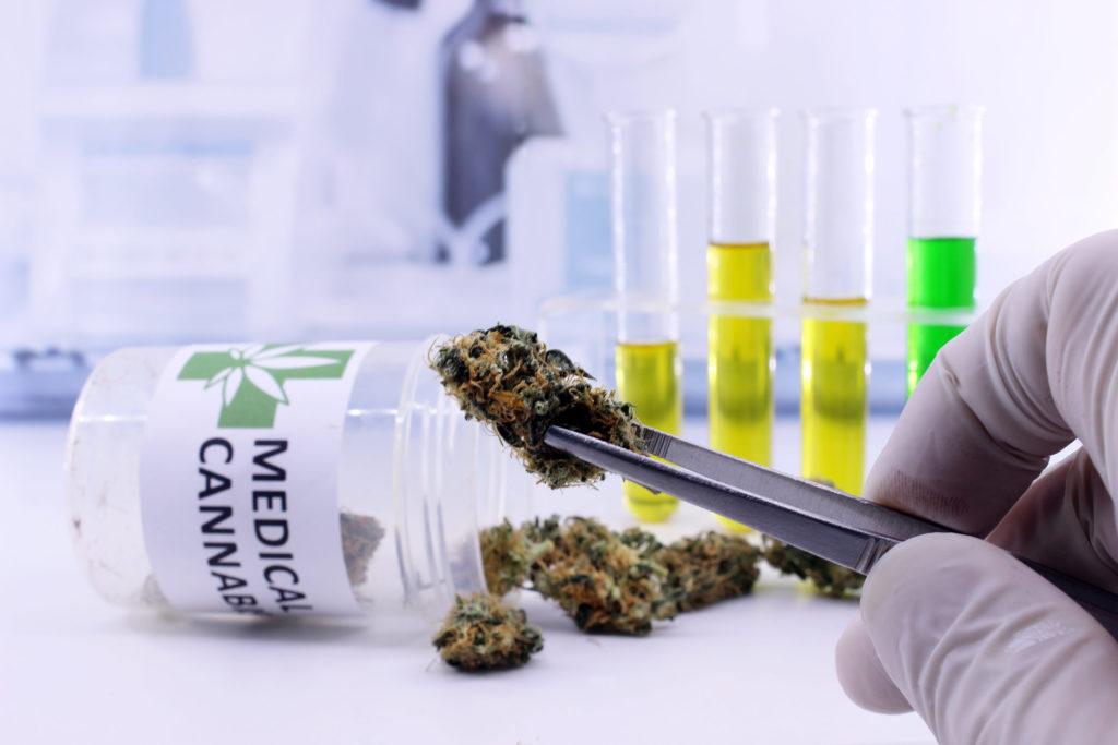 Die Zukunft von medizinischem Cannabis in Kanada