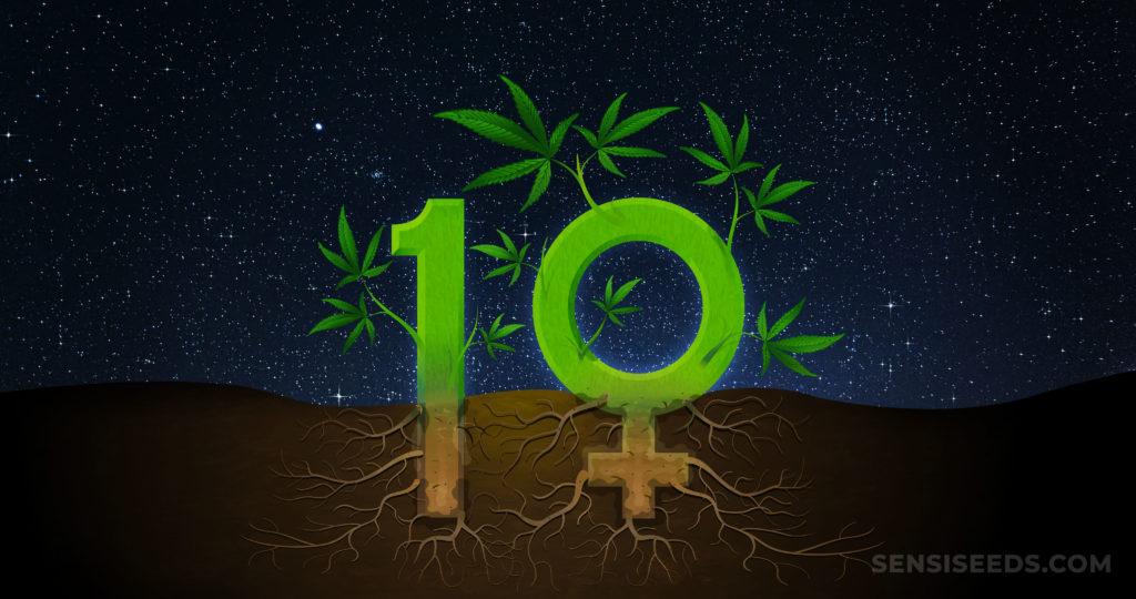 Die Zahl zehn ist als Cannabis-Pflanze mit Wurzeln, die in den Boden wachsen