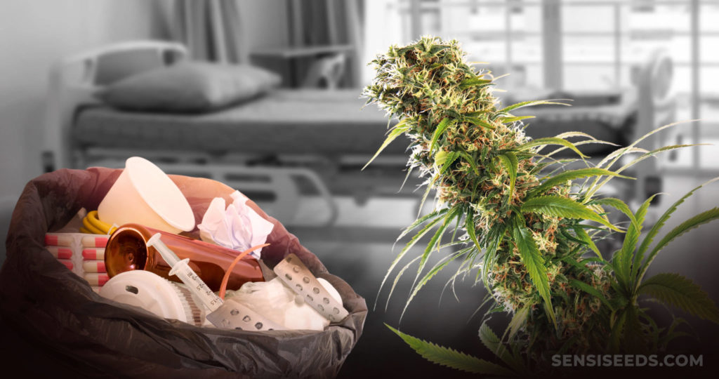 A bag full of medical equipment in a hospital room and a cannabis plant