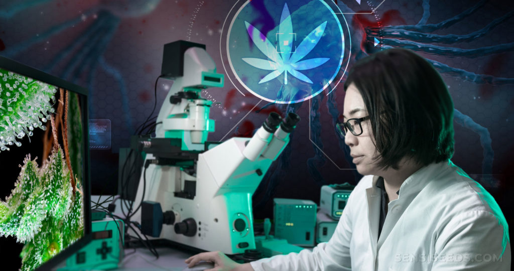 A scientist sat at a computer. On the screen is an image of cannabis