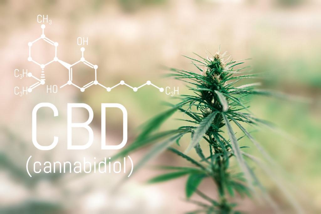 La formule chimique de la CBD et une plante de cannabis