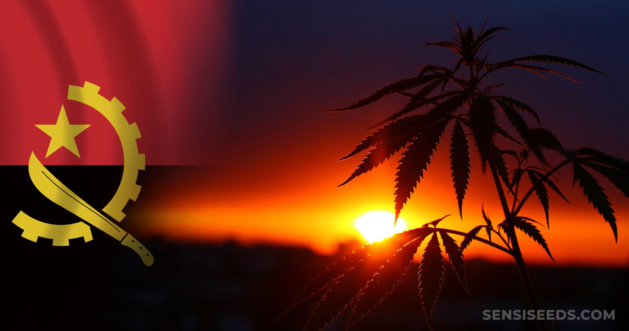 The Angola flag and a cannabis plant against a sunset