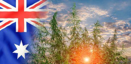The Australian flag and cannabis plants