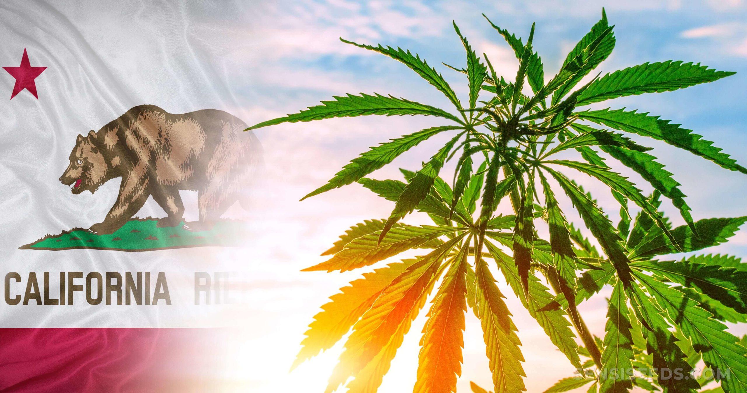 The California flag and a cannabis plant against a blue sky