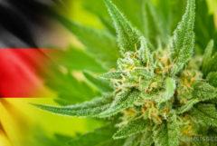 The German flag and a cannabis plant