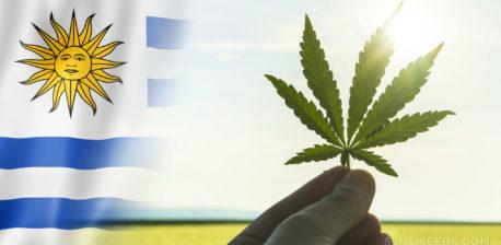 The Uruguay flag and a cannabis leaf against the sunshine