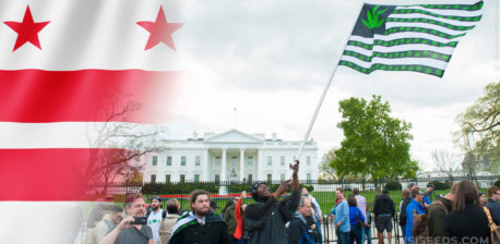 The Washington flag and people on protest with cannabis flag in front of the White House