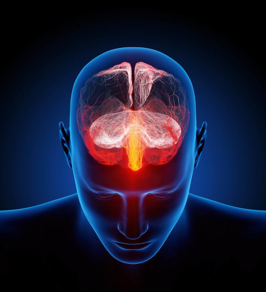 Ein Gehirn mit verschiedenen Rezeptoren, die in Rot, Weiß und Gelb hervorgehoben sind