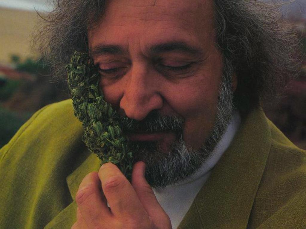 Jack Herer tenant un bourgeon de cannabis à son visage