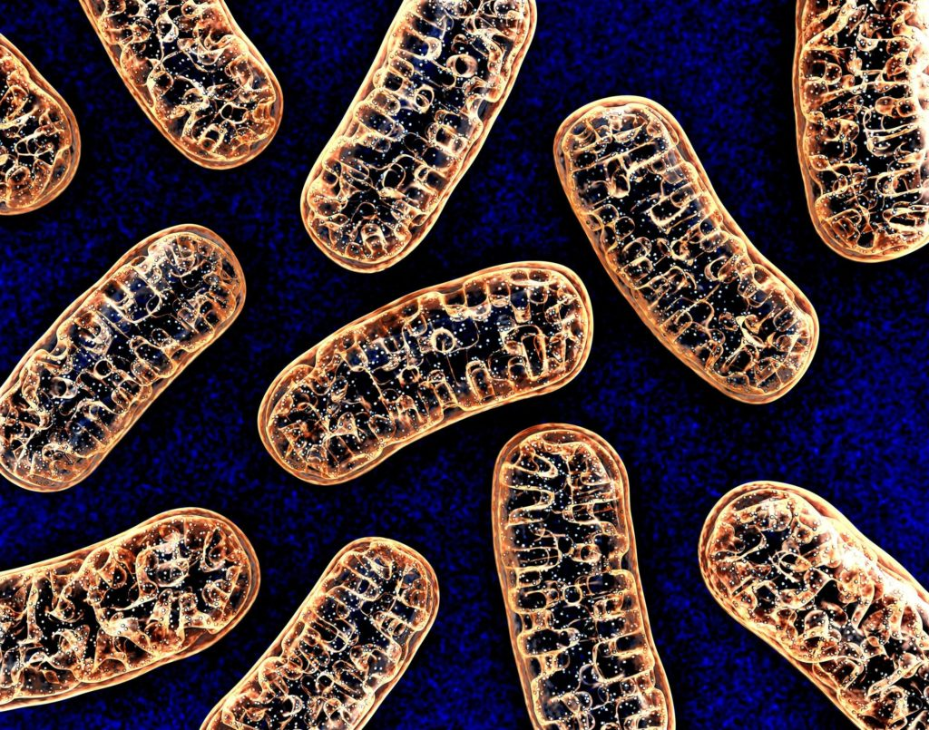 Some mitochondria cells against a blue background