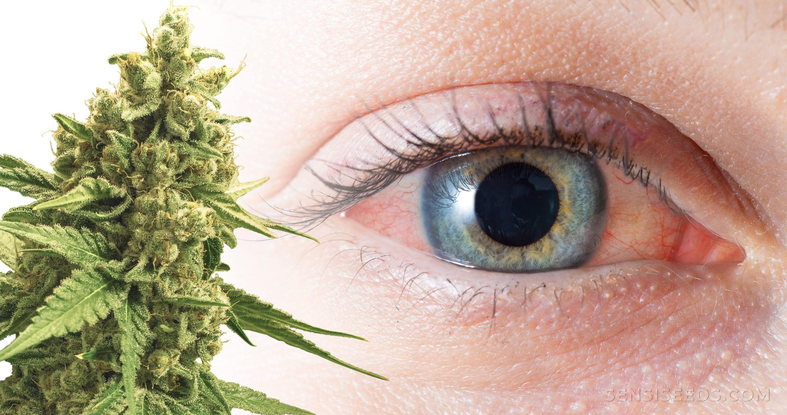 Картинки глаза с коноплей конопля для выращивание