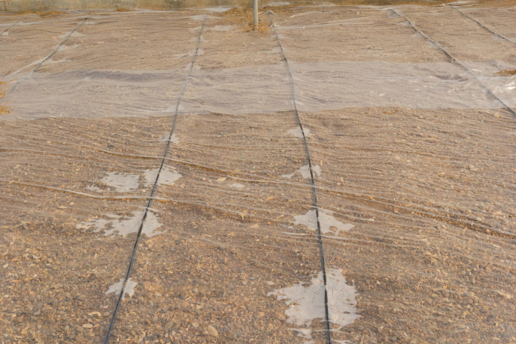 A sheet of plastic covering an expanse of soil