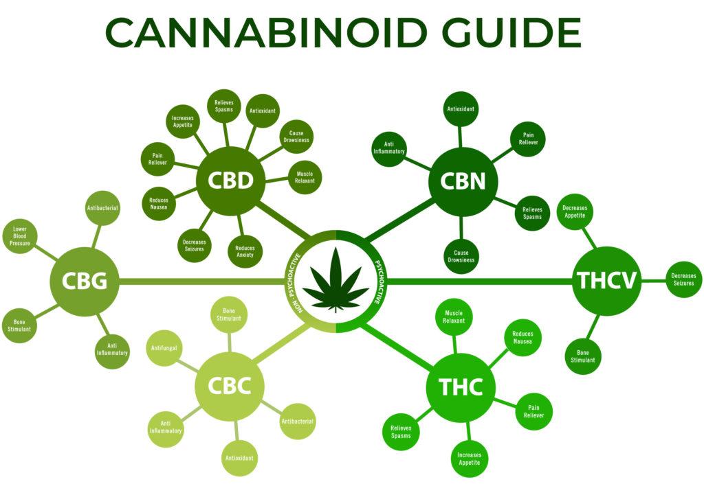 Un diagramme de différents cannabinoïdes