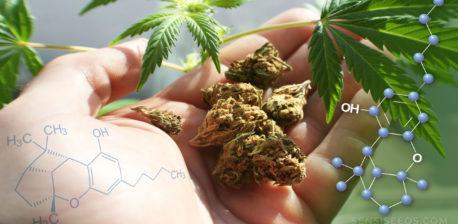 De chemische structuur van cannabicyclol, cannabisknoppen in de palm van een hand en cannabisbladeren