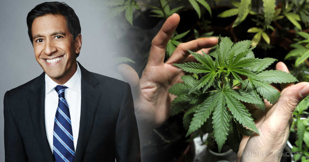 Sanjay Gupta and two hands holding a cannabis plant