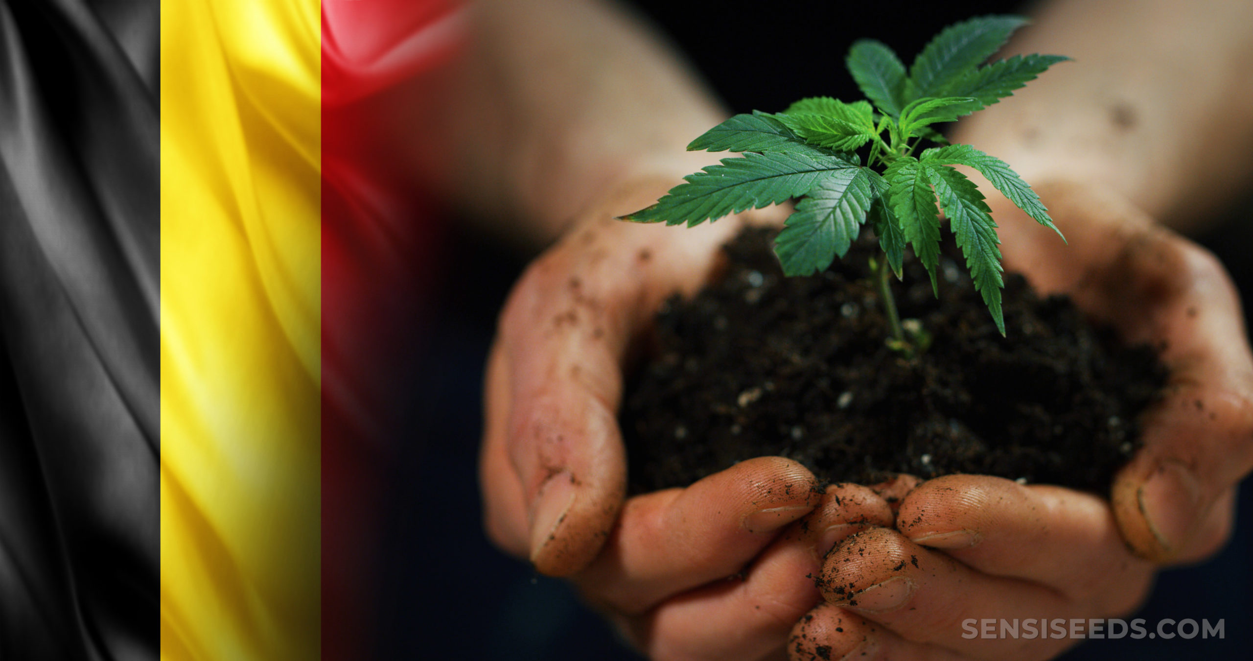 The Belgian flag and a person holding a cannabis plant in their hands