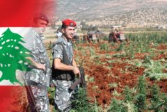 The Lebanon flag and soldiers guarding a hemp field
