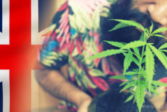 The United Kingdom flag and a man holding a small cannabis plant