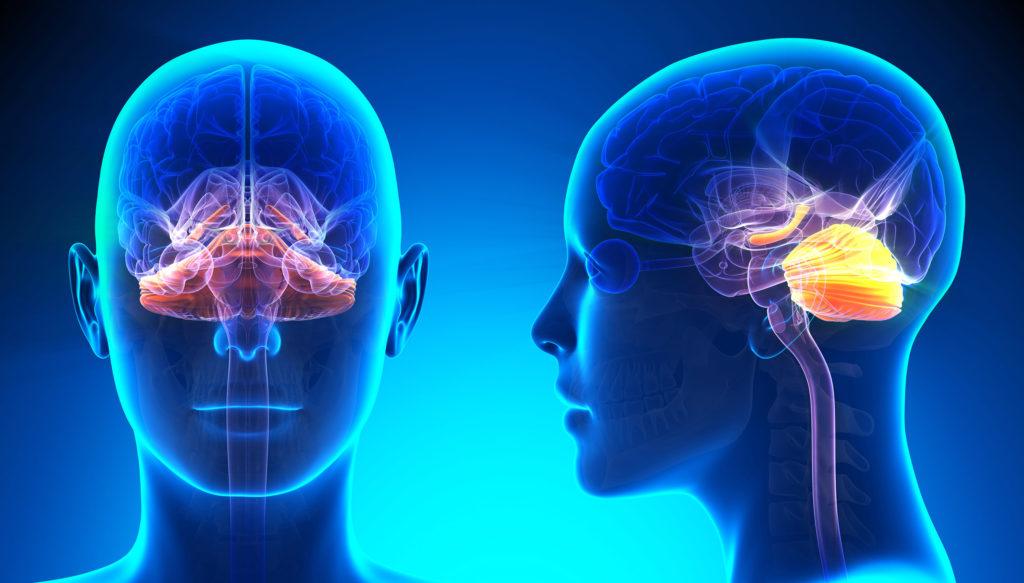 Twee blauwe röntgenfoto's met verschillende delen van de hersenen gemarkeerd