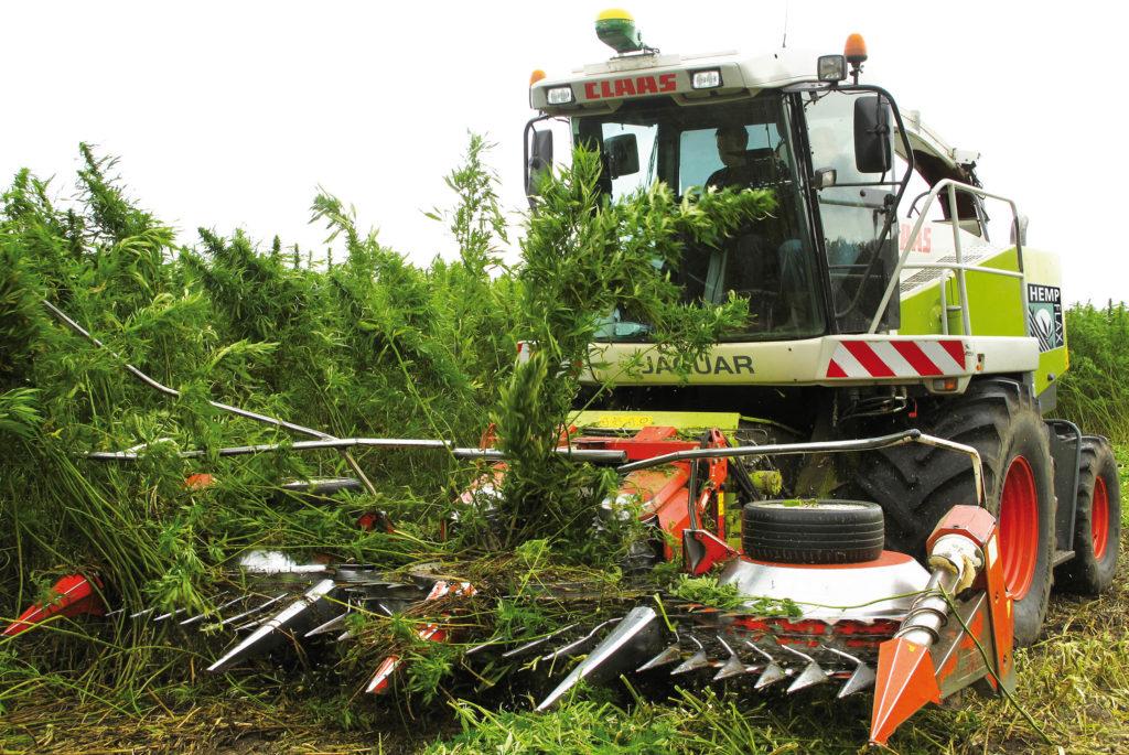 Een tractor oogstende hennepplanten