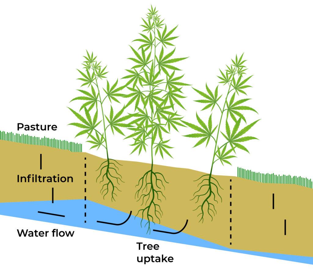 Eine Grafik der Komponenten, die für eine gesunde Pflanze erforderlich ist, um zu wachsen