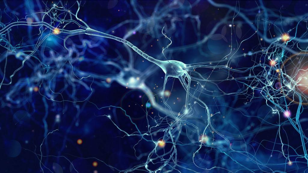 Gehirnrezeptoren.