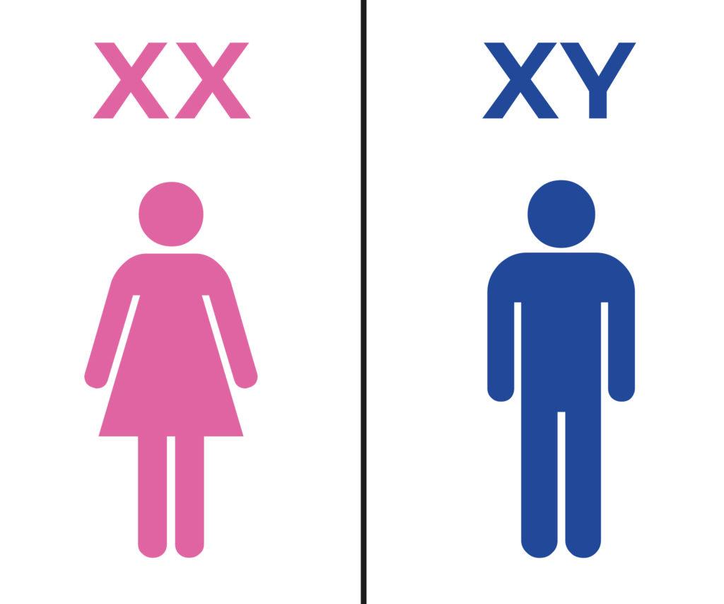 A pink female figure and a blue male figure