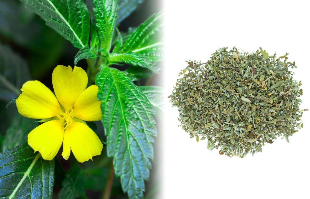 10 substituts au tabac pour accompagner le cannabis - Sensi Seeds