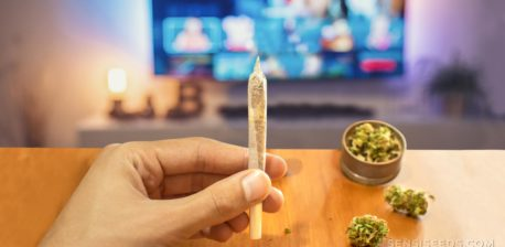 A hand holding up a rolled joint. In the background is a blurred TV screen