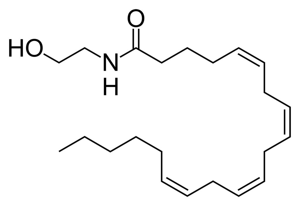 The chemical structure of the anandamide molecule
