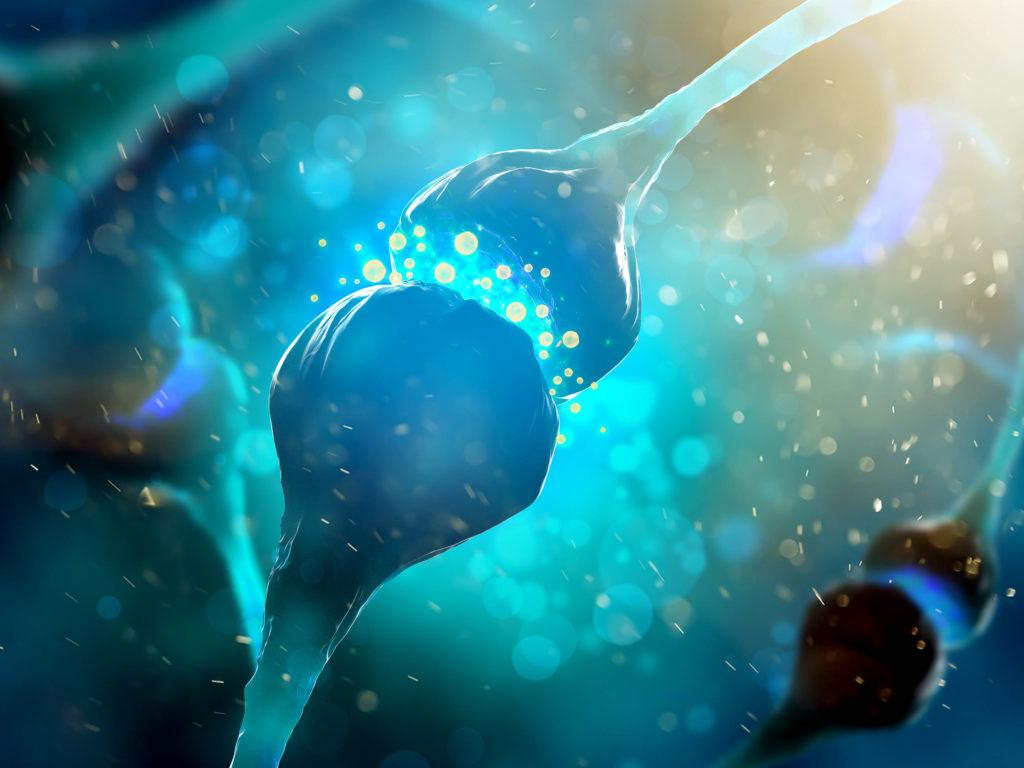 Cannabinoïde receptoren