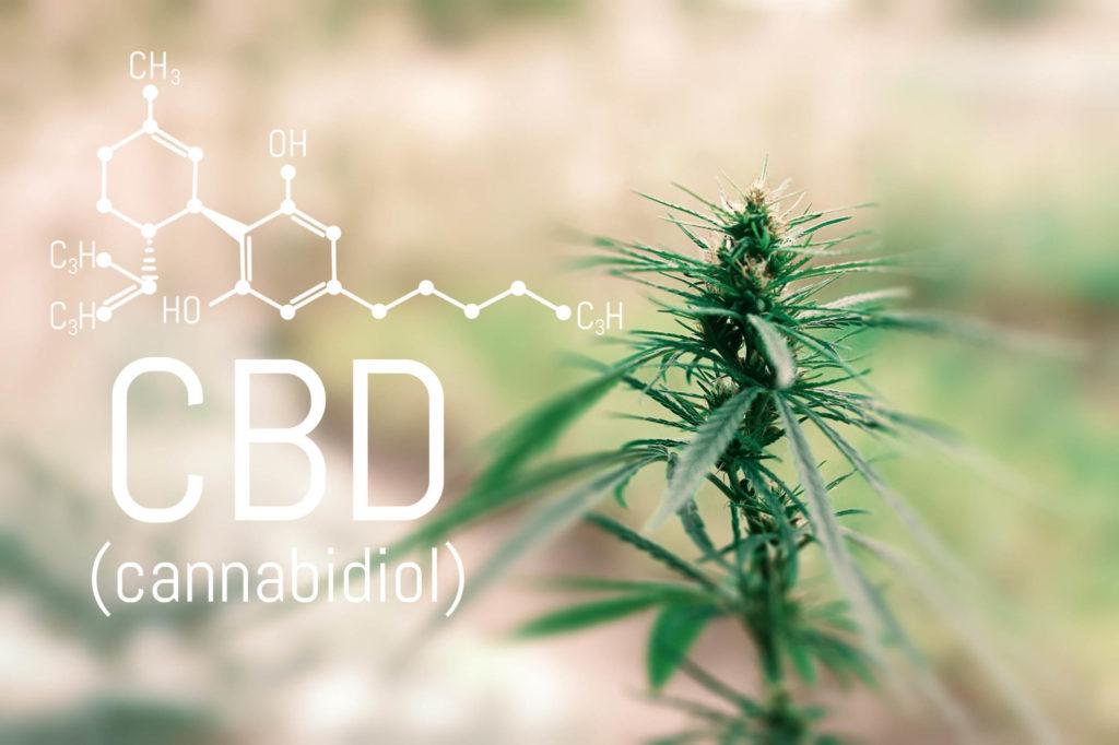 Die chemische Formel von CBD mit einer Cannabisanlage im Hintergrund
