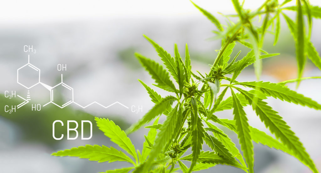The chemical formula of CBD and a cannabis plant